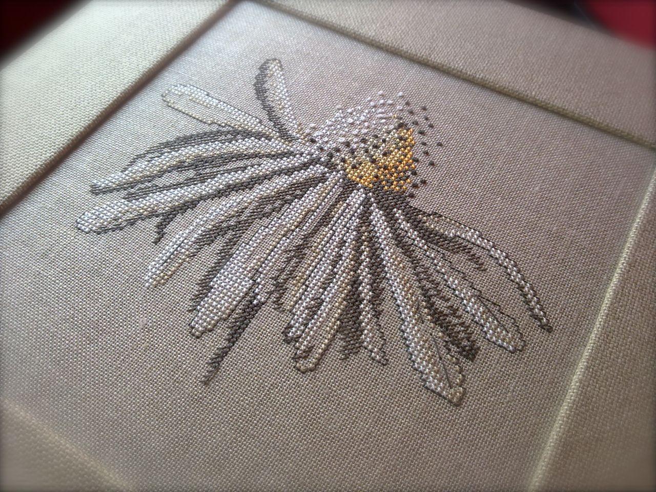 daisy02.jpg
